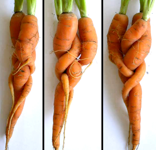 <B>creative carrots…</b>