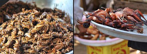 cambodia bugs & birds