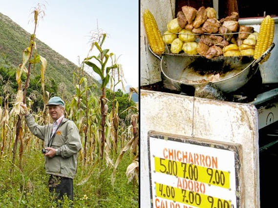 Peru cornfields and street food