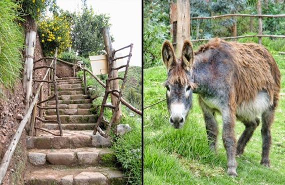 donkey in Peru