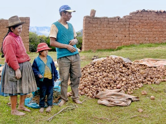 Potato Farmers in Peru