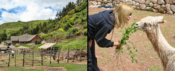 llama farm in Peru