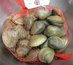 clams in mesh bag