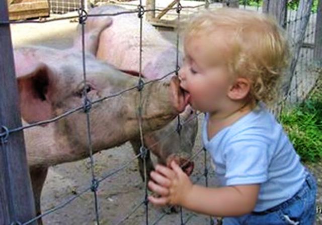 pig-snout-kiss