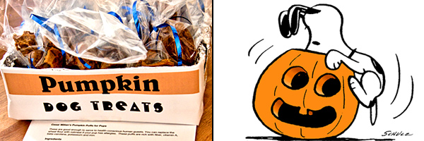 pumpkin-dog-treats-snoopy2