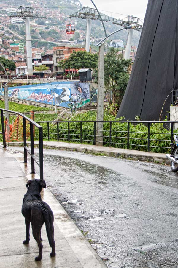 dogs-in-colombia11