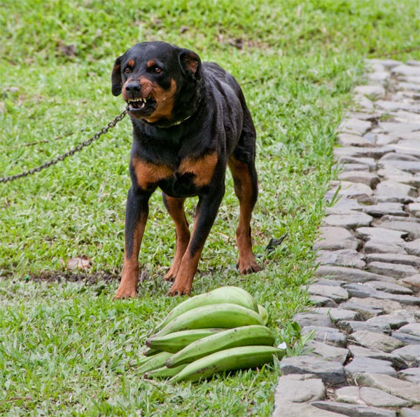 Dogs in Colombia SA | cathy nelson arkle
