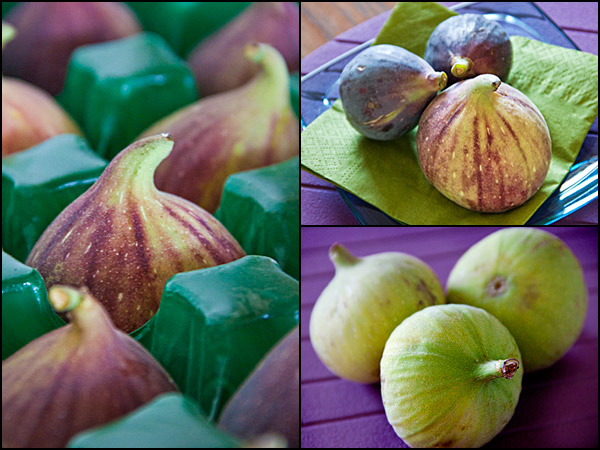 CAFigs | cathy arkle